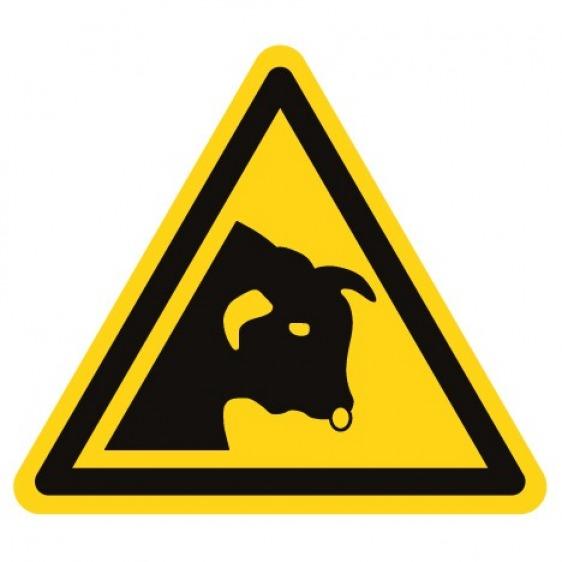 Pictogramme danger taureau ISO7010-W034